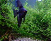 fish_w2